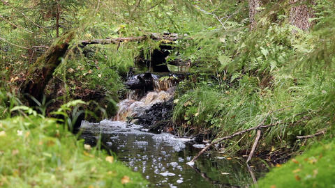 small waterfall on a creek in forest Footage