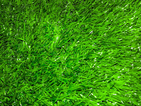 Decorative green grass Foto