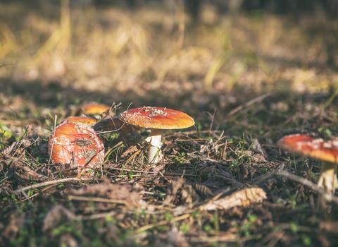 mushrooms in the forest Fotografía