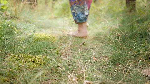 Barefooted woman walks on grussy path in a pine forest. Close up of feet and Footage