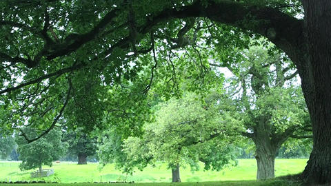 Trees on a rainy day in Scotland Image