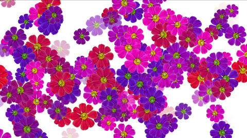 4k Daisy wedding background,wildflower flower plant bloom pattern,vitality Live Action