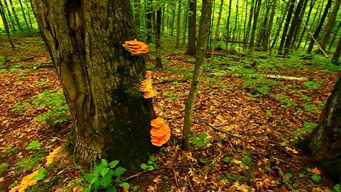 Porcupine Mountains Northwoods Michigan Footage
