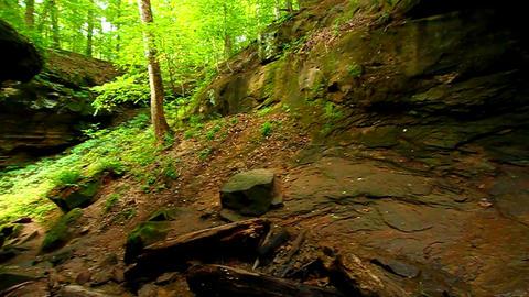 Turkey Run State Park Landscape stock footage