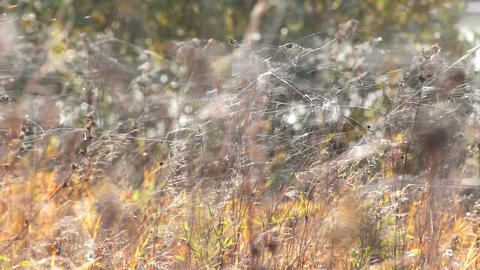 Web on autumn grass Footage