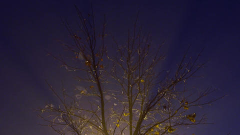 the tree at night is shrouded in fog, lit by a lamp ビデオ