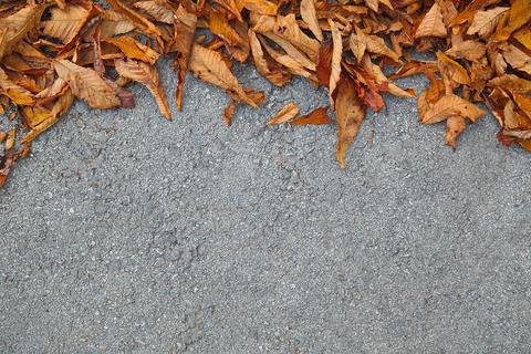 Leaves on street Fall is coming with empty space for text フォト