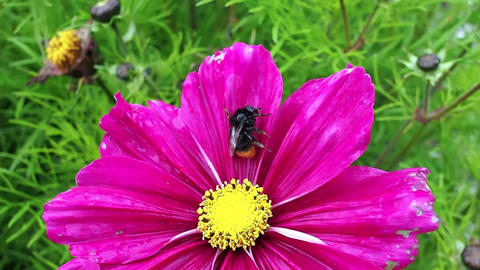 Bee on a purple flower Image