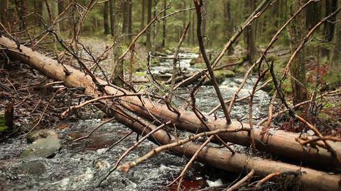 Fallen tree over fast stream Footage