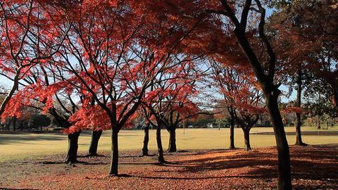 Autumn Leaves / Fall Colors / Trees - Fix Image