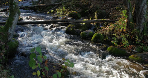 Beautiful Stream Deep In The Forest In Autumn Footage