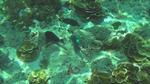 Tropical colourful fishes Footage
