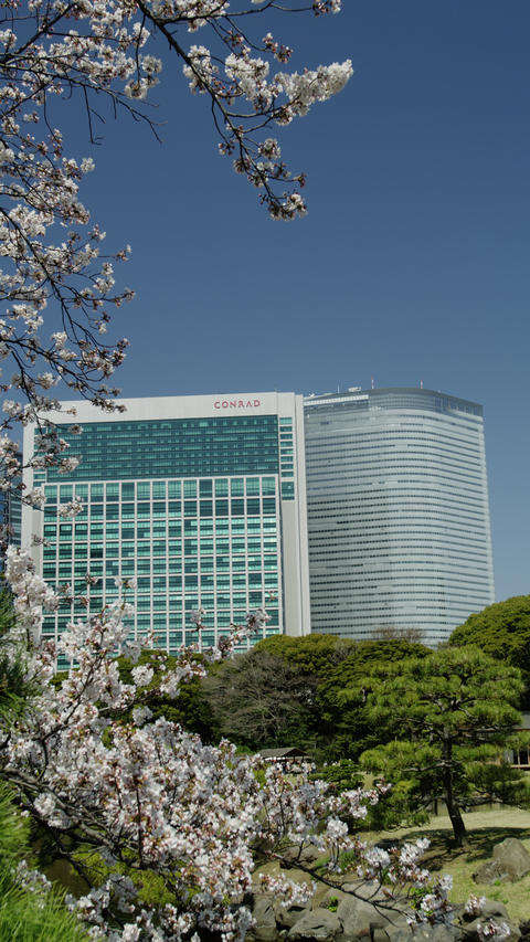 Cherry Blossom Time in Tokyo ビデオ