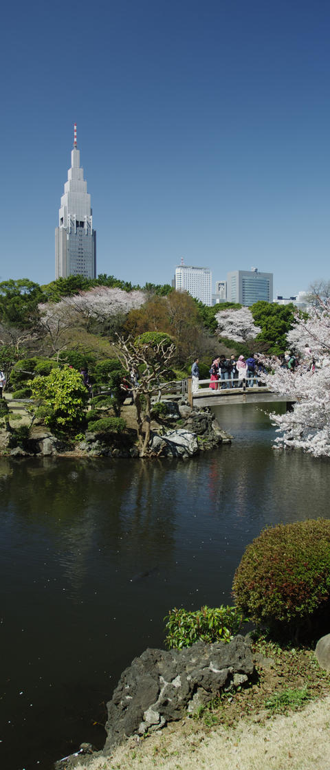Cherry Blossom Time in Tokyo Filmmaterial