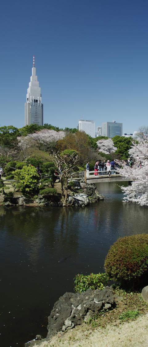 Cherry Blossom Time in Tokyo ビデオ