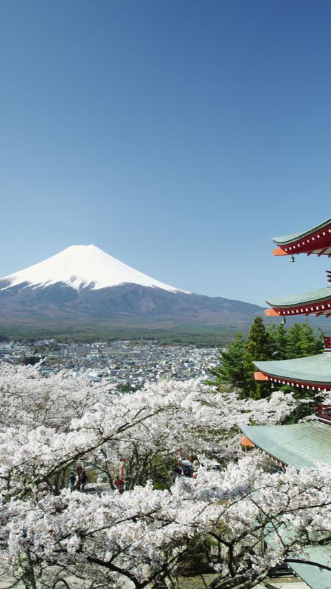 Cherry Blossom Time near Mount Fuji in 4k ビデオ