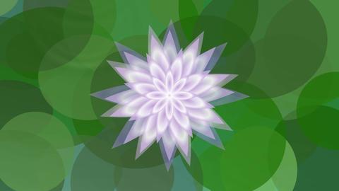 Flowers 2 2