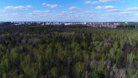 Spring Forest Under the Blue Sky Footage