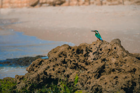 Common kingfisher Alcedo atthis bird sitting on the sea rock at Foto