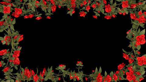 Red Roses Growing Frame With Alpha Channel GIF