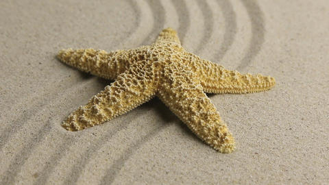 Approximation of starfish lying on the sand Live Action