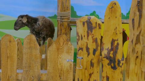 Cute brown sheep Image