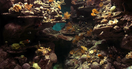 4K, Colorful Corals, Marine Life, Underwater World Footage