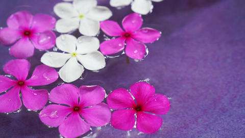 Video pink flowers floating in bowl of water from top view. Spa decoration Footage