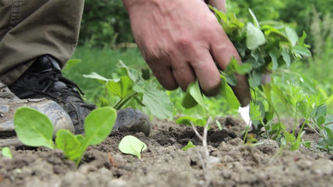 Gardener who pulls out with a knife roots of weeds from the ground 2 Footage