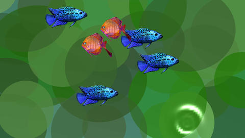 Video animation orange and blue exotic fishes in green aquatic plants in the Image