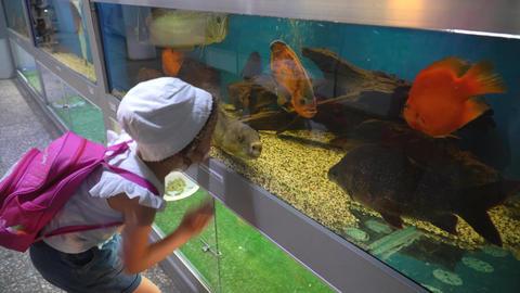 Marine Life In Aquariums