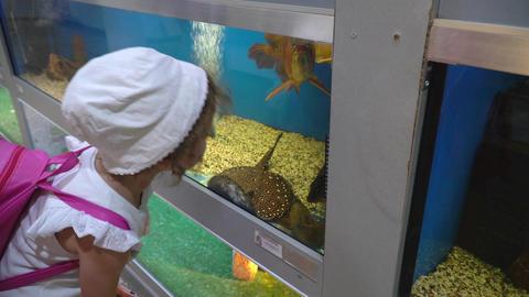 Marine Life In Aquariums 0
