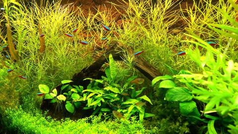 Marine Life In Aquariums 1
