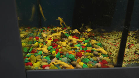 Marine Life In Aquariums 2