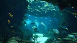 Deep Ocean Colorful Fish Swimming In Large Aquarium ビデオ