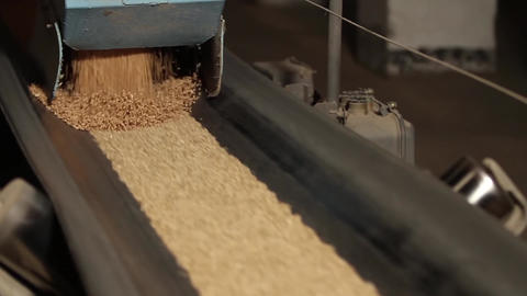 Wheat grains are poured onto moving conveyor belt Footage