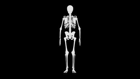 Full skeleton Live Action
