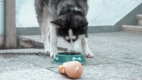 Hungry dog with bowl of tasty food Live Action