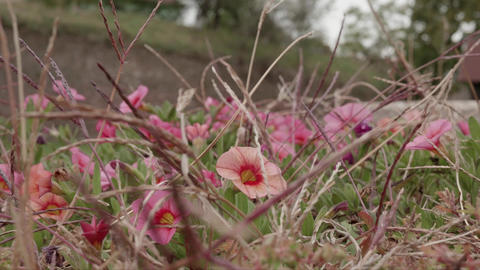 Bush with red flowers and dry herbs in the wind 29 Footage