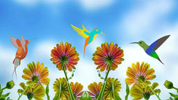 Hummingbird in flowers Animation