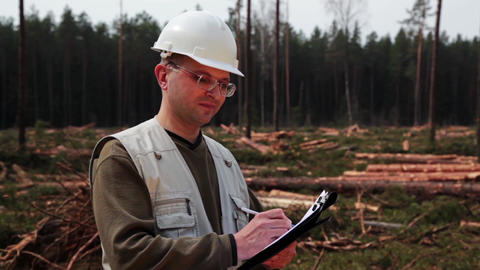 Harvester logging pine timber in the forest under control of logistic manager Footage