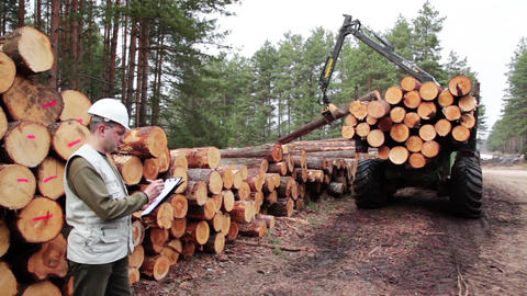 Pine timber logging by forwarder in the forest under control of logistic manager Footage