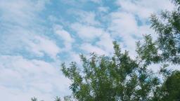 tree and blue sky Footage