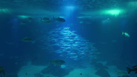 Fish pond under water surface Footage