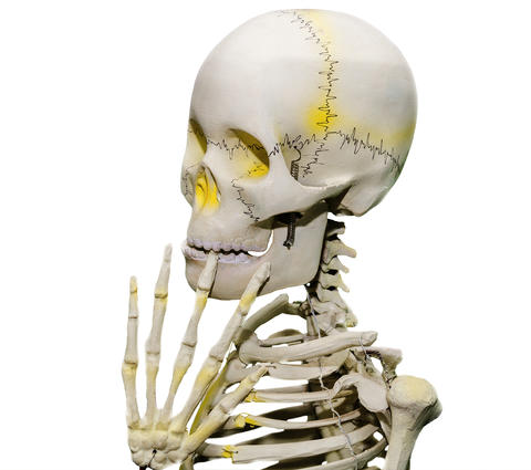 An embarrassed skeleton Photo