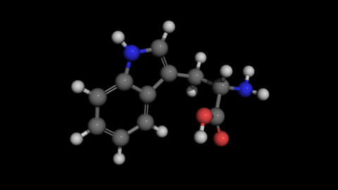 L-tryptophan molecule model rotating Animation