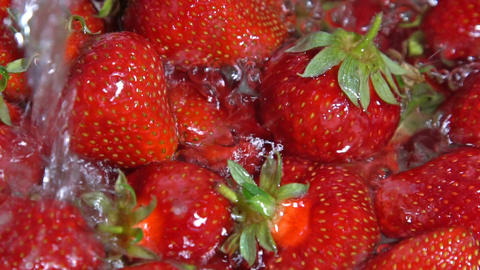 Juicy ripe strawberries washed with water. Close-up Footage