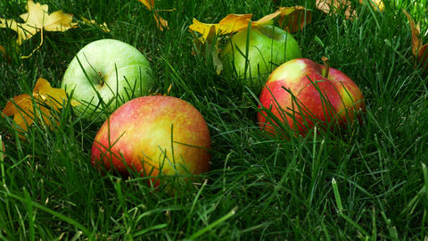 Red Apples Falling on Green Grass Footage