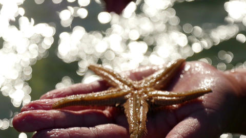 Young girl standing in sea and presenting sea star she found on sea floor Live Action