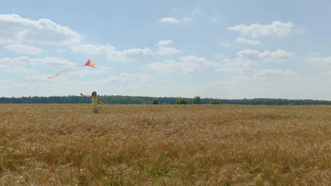 Cheerful woman runs with a bright kite on wheetfield at sunny day Footage